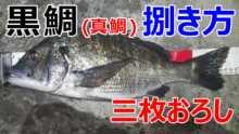 真鯛・黒鯛の捌き方