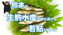 生駒水産の若鮎